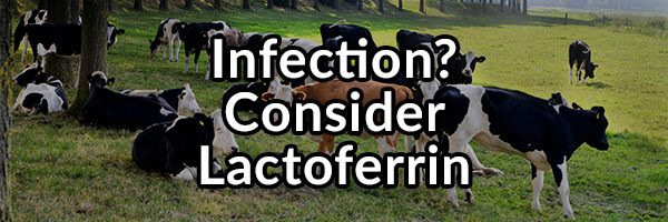 Got an Infection? Consider the Use of Lactoferrin to Improve Your Health