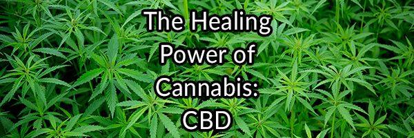 The Healing Power of Cannabis: CBD