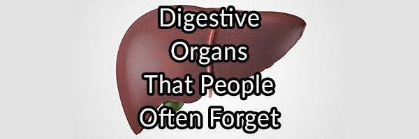 Digestive Organs That People Often Forget