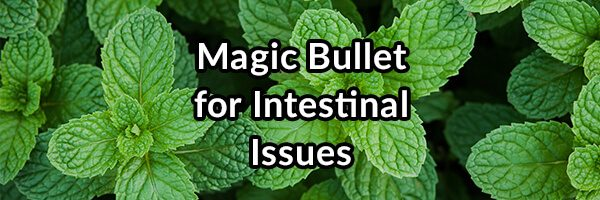 Magic Bullet for Intestinal Issues - Enteric Coated Peppermint Oil
