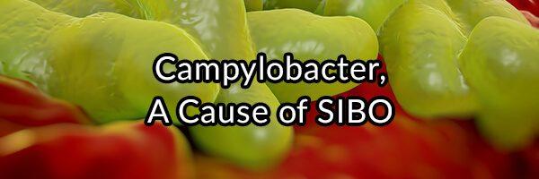Campylobacter, A Cause of SIBO