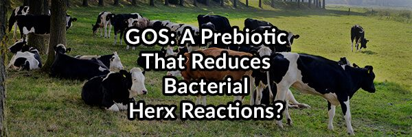 GOS: A Prebiotic That Reduces Bacterial Herx Reactions?