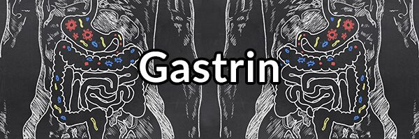 Gastrin - The Important Hormone for Stomach Health, GERD, and Digestion