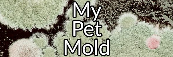 My Pet Mold: The Vicious Cycle of Mold Exposure and How to Heal