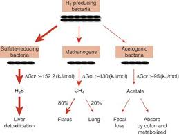 SIBO: Hydrogen, Hydrogen Sulfide, or Methane, What Is the
